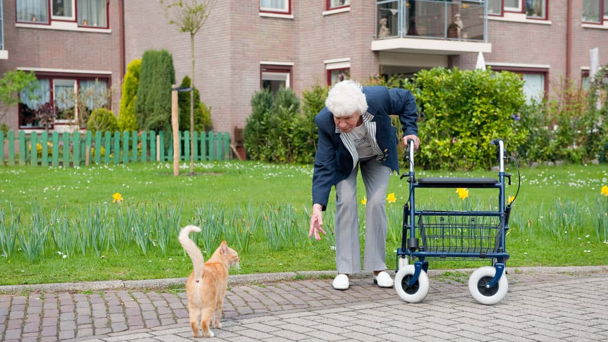 Best Walkers and Rollators for Seniors